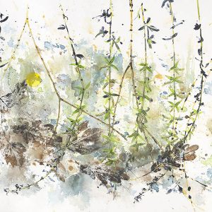 Spring Crack Willow